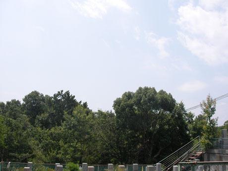 20100815-0001.jpg